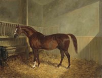 Pantaloon in a stable